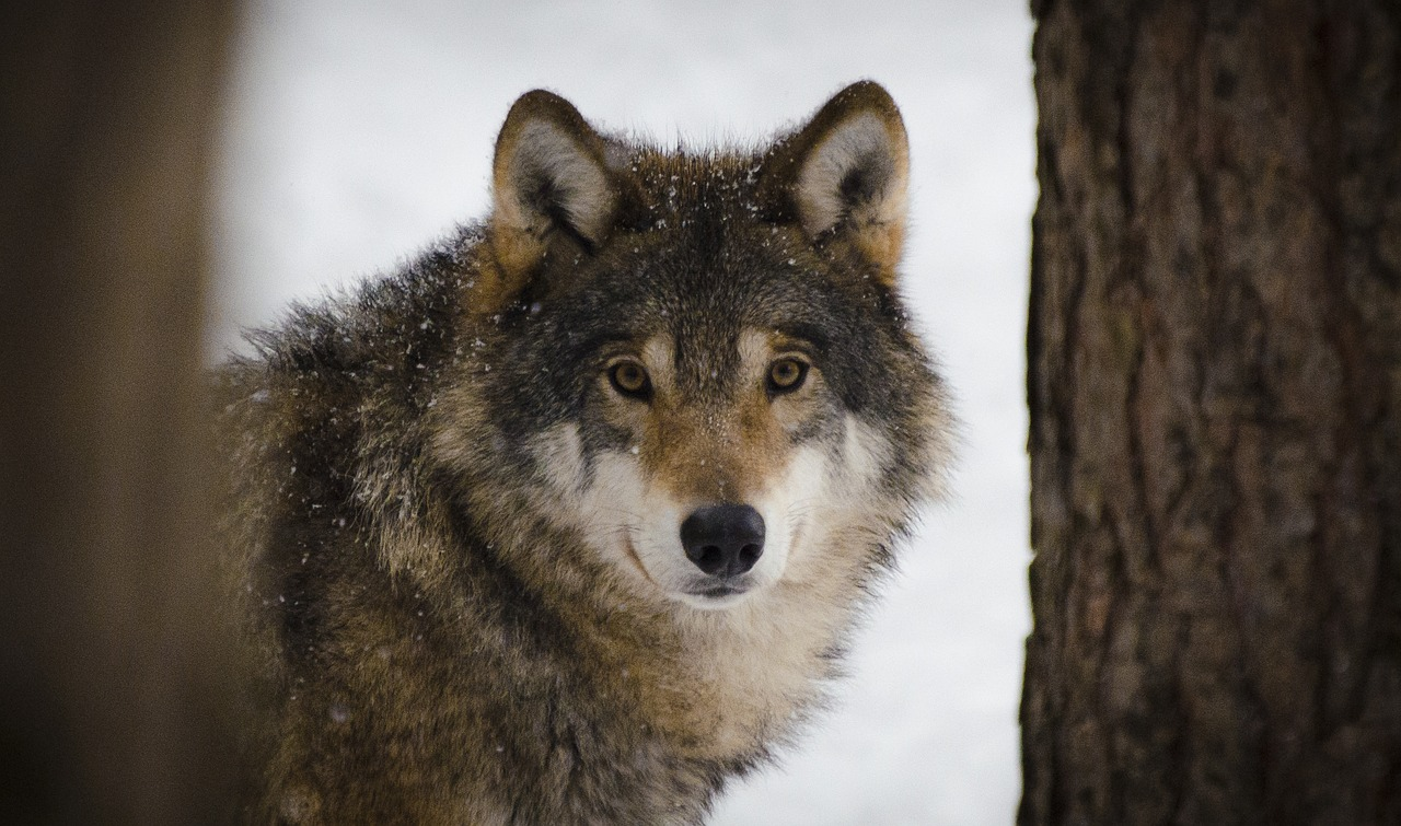 Gesprächsreihe mit André Bock – Thema -Der Wolf im Landkreis Harburg-